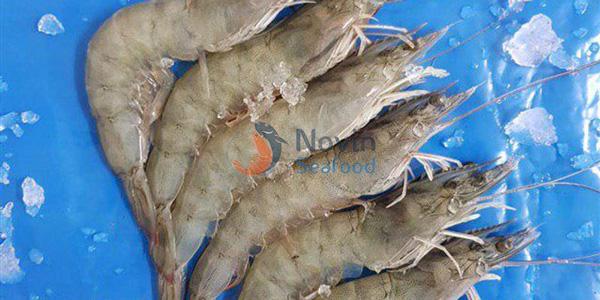 Iranian fish | HOSO shrimp