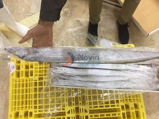 Largehead ribbonfish export